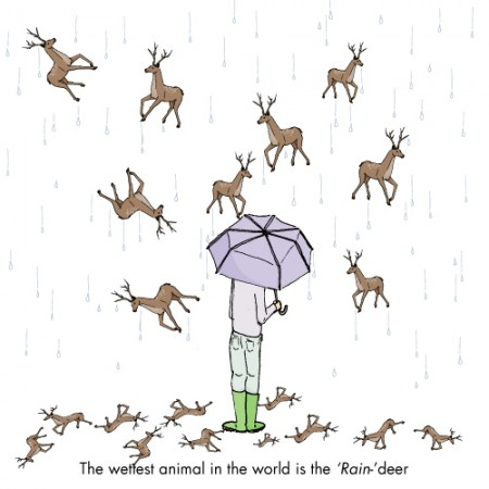 The wettest animal is the raindeet