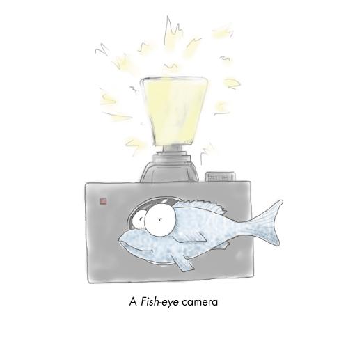 Fish-eye camera